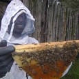 Combat Malnutrition with Beekeeping